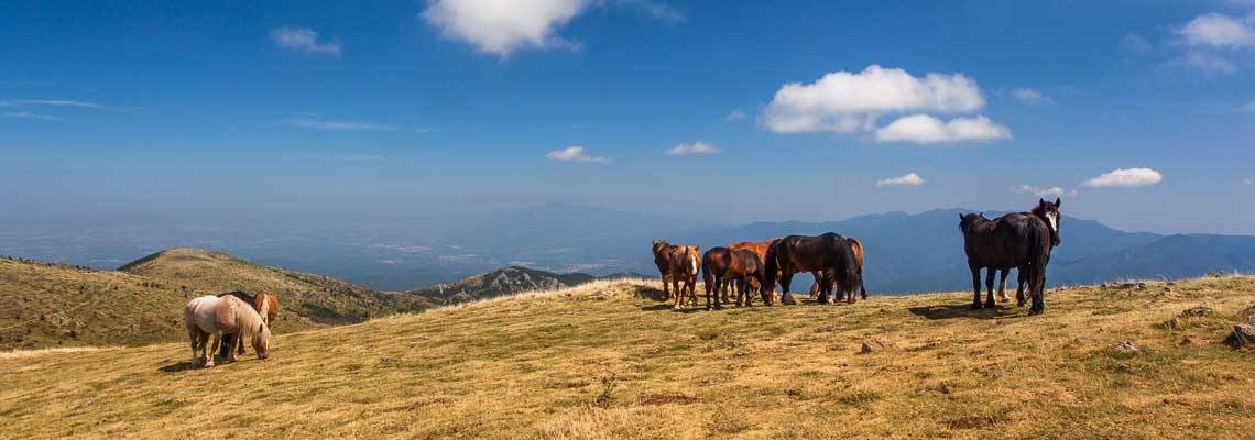 chevaux-pyrenees-MMZS